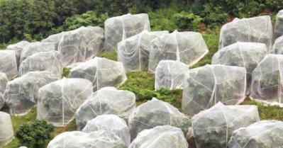 防蟲網袋 防蟲網 水果網袋