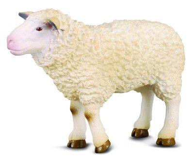 【阿LIN】88008A 綿羊 PROCON-190 CollectA 動物模型 仿真動物模型 動物