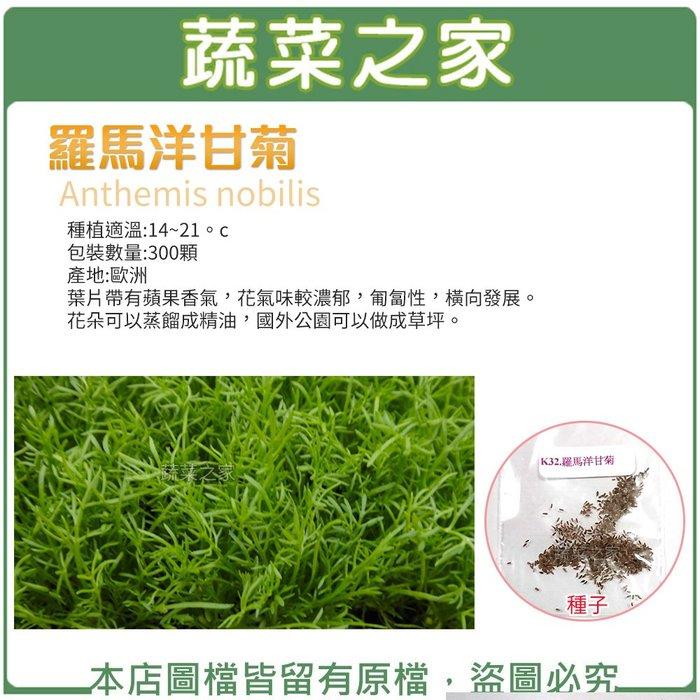 【蔬菜之家】K32.羅馬洋甘菊種子300顆(花朵可以蒸餾成精油,國外公園可以做成草坪.香草種子)