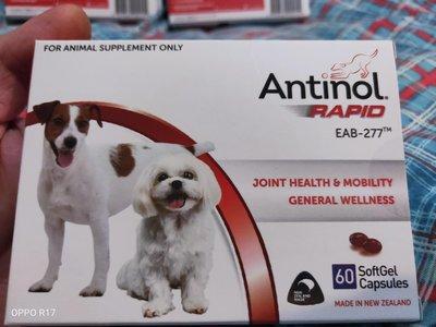 Antinol 安適得  犬用 60顆裝