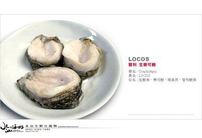【水汕海物】南美智利 鮮美生鮑魚(樂可鮑)。『實體店面、品質保證』