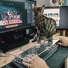 現貨【Mr.DL】神器!! 防貓鍵盤罩/防貓咪鍵盤罩 台灣製造 大推~ 防貓踩透明鍵盤蓋 電腦救星 貓奴必備 可客製化
