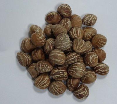 S-058【種子盆栽】馬拉巴栗種子。1份30元20顆。別名:美國花生、發財樹。 台南市