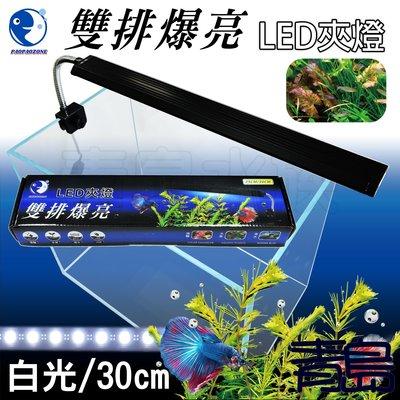 Y。。。青島水族。。。WY-I8W台灣paopaozone泡泡龍---雙排爆亮LED夾燈 水草燈 全白燈==白光30cm 新北市