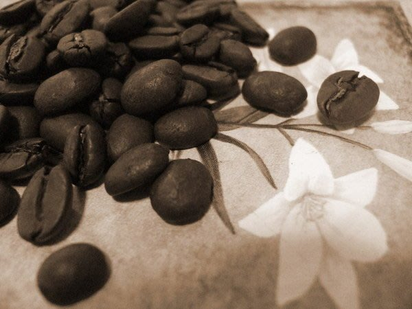 {喜朵浪漫愛飲生活館} 衣索匹亞耶加雪妃咖啡Ethiopian Yirgacheffe耶家雪夫喜朵咖啡有口皆碑~