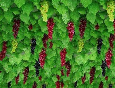 模擬葡萄葉樹葉子綠葉塑膠綠植物室內水管假花藤條爬藤蔓吊頂裝飾【宜家元素馆】