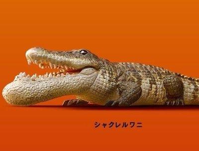 Takara 熊貓之穴 シャクレルプラネット1 Shakurel Planet 1 下巴兜兜 戽斗動物園P1 (鱷魚)