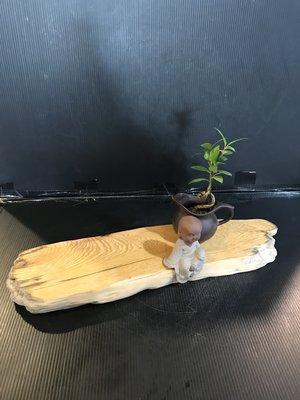 【 檜人檜語 】超重油鳳尾奇木紅檜超藝度 原木座b6
