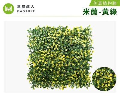 【草皮達人】米蘭-黃綠 抗UV款 仿真植物牆 (350元/片,整箱10片特價3300含運)園藝 景觀 裝潢 空間佈置