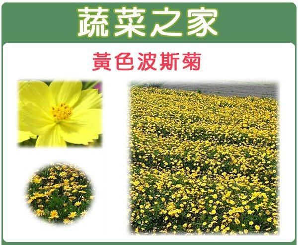 【蔬菜之家】H07.黃色波斯菊種子300顆(美化綠化環境作物.花卉種子)