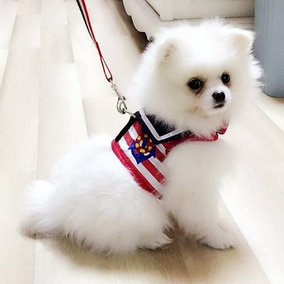 博美比熊泰迪貴賓背心式狗狗牽引繩胸背帶小型犬幼犬遛狗繩狗錬子