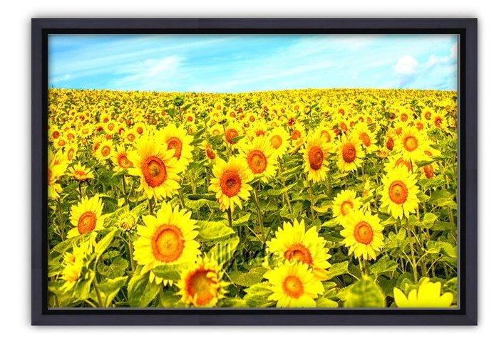 四方名畫: 太陽花向日葵035 C尺寸  含實木框/厚無框畫 畫質細緻 裝飾畫MIT可訂製尺寸