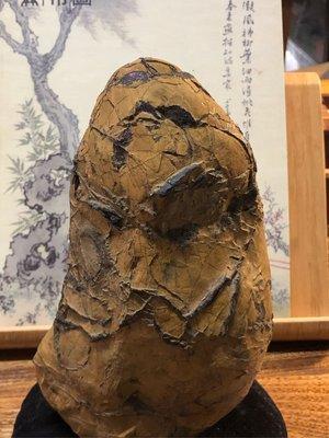 龜甲石,21*12*6,特價2000