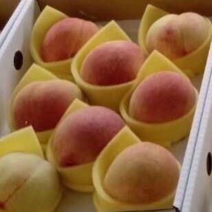 [110年預購開始] 梨山水蜜桃(海拔2000m) 產期2-3星期  依下單順序出貨售完為止~~欲下單者請私訊另開賣場