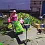 慧軒農產自產自銷(安心農產) 白龍王水果玉米10斤裝500元免加運,免加運,免加運(家庭號小包裝)