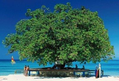 (藝)日本拼圖原裝進口拼圖 300片拼圖 攝影風景 樹酒吧 蒙特哥海灘33-088