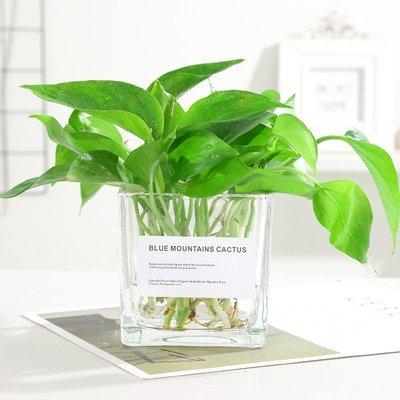 歐式花瓶簡約水培植物 綠蘿含瓶水培玻璃花瓶水養植物器皿桌面擺件除甲醛