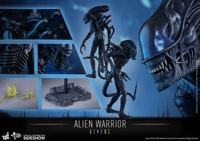 100%全新未開 Hottoys Alien Alien  Warrior AVP MMS354 異形 異獸戰