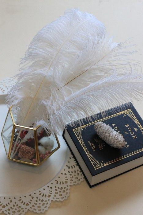 白羽毛, 駝鳥毛, 約45cm[原生態工作室]