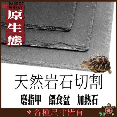 【台灣24H出貨】 30*40CM  陸龜岩石板 陸龜石板 爬蟲石板 天然岩石板 陸龜磨甲岩板 陸龜食盤 曬背板