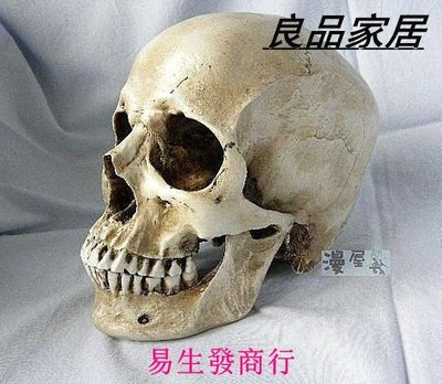 【易生發商行】仿真1:1人類頭骨模型 醫學頭骨模型 骷髏樹脂教學模型骷髏頭人F6474