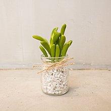 曙MUSE|仿真 多肉植物 仙人掌 玻璃 文青 原創 咖啡廳 民宿 餐廳 住家 擺飾 小盆栽