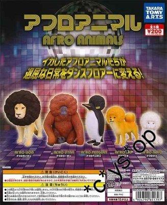 (Jccyshop) 全新 正版 爆炸頭 Afro Animals 動物扭蛋全套5隻 齊蛋紙 爆炸狗獅子大猩猩