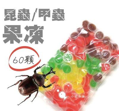 小郭水族-甲蟲館【甲蟲果凍 (綜合) 16g  60顆/包】 獨角仙 兜蟲 鍬形蟲 幼兜 大兜