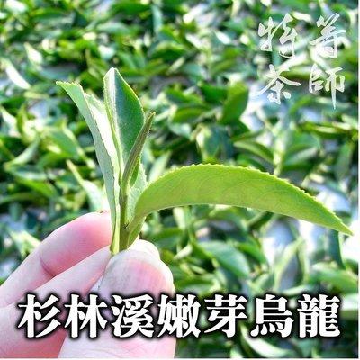 杉林溪烏龍茶嫩芽, SGS 高山茶 台灣茶 1600/斤 《特等茶師》