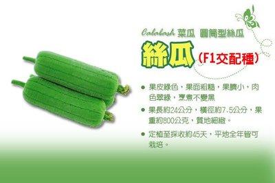 絲瓜種子 F1 一代交配  (高產量、烹煮不黑) 菜瓜 短圓筒型