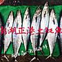 【瀚海鱻~澎湖海鮮小舖】野生海釣鮮魚【整尾土魠魚:7公斤級】真空包裝直送
