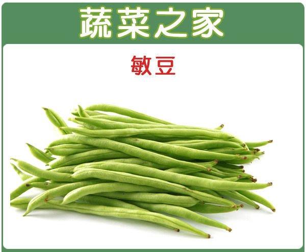 【蔬菜之家】E01.敏豆種子100顆(豆莢特長.豆莢白霧.圓形莢.蔬菜種子)