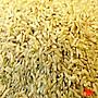 {豐}糧行 花蓮富里糙米(600公克)長糙米...