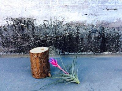 《Are獨立之家》空氣鳳梨木架花架 台灣肖楠 裝飾品 拍攝道具商品不含空氣鳳梨 另售