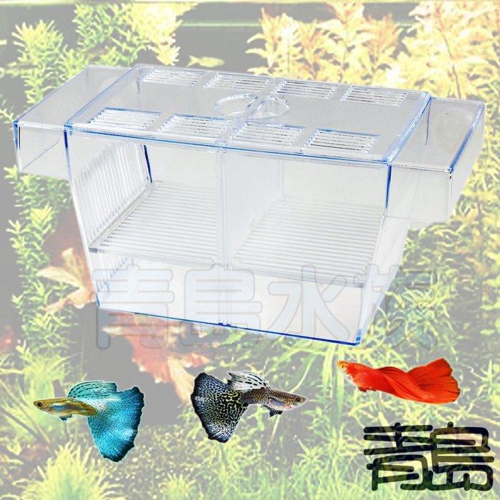 Y。。。青島水族。。。F-177-L佳力仕 ALEAS 金利佳 雅柏 XL 鐳力 水世界--繁殖箱 隔離箱==L