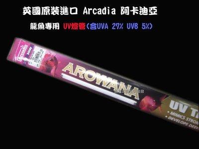 魚水之歡水族批發 ARCADIA 英國阿卡迪亞 T8 龍魚專用紫外線燈管(30W)~大俗賣~!