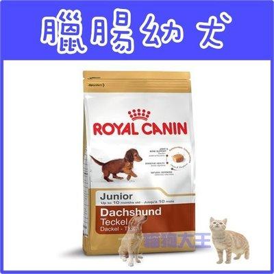 **貓狗大王**法國皇家《臘腸幼犬PRDJ30》1.5kg