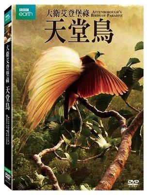 合友唱片 面造 自取 大衛艾登堡祿:天堂鳥 DVD Attenborough's Birds of Paradise