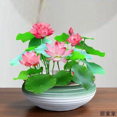 花盆 花器 陶瓷擺飾 粗陶水仙專用水培彩金花盆一葉碗蓮銅錢草富貴竹簡約陶瓷紫砂透氣