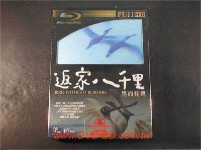 [藍光BD] - 返家八千里 : 黑面琵鷺 Bird Without Borders Black Faced (公視)