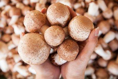 乾燥巴西蘑菇(大)安全檢驗/自產自銷/出口等級優良品