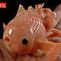 ﹣﹦≡|璟藏古玩|天然深海粉紅珊瑚金魚立體雕擺件(附木座.收藏景錦盒) (保真海珊瑚)∥(直購價,只給第一標)∥≡﹦﹣