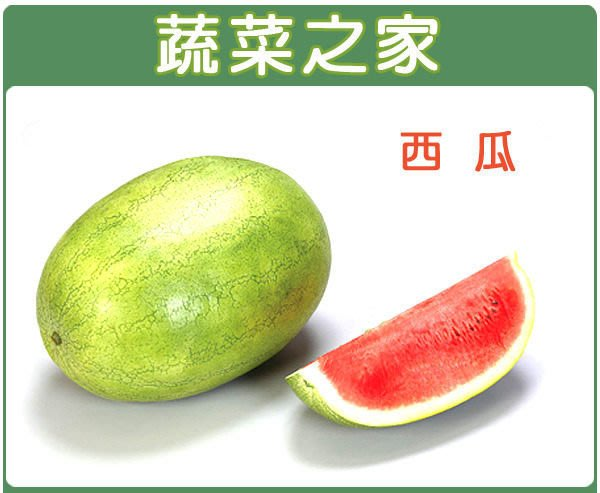 【蔬菜之家】I01.西瓜種子5顆(玉豐品種紅肉,散佈淡綠色網紋,糖度最高.果重約12~15公斤.蔬菜種子)