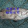 特價- 深海野生大石斑魚頭丁(鮢過魚)每公斤3...