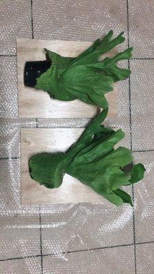 女王鹿角蕨 兩盆下標處
