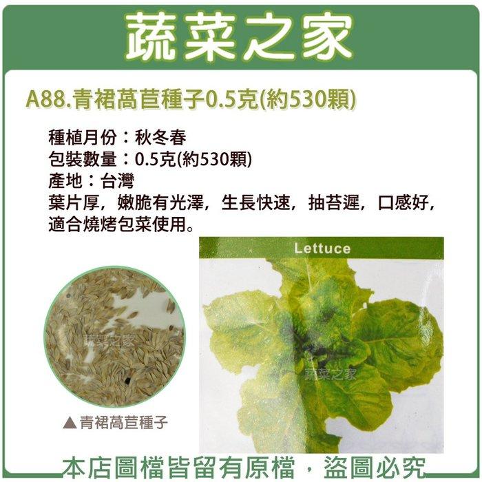 【蔬菜之家】A88.青裙萵苣種子0.5克(約530顆)(葉片厚,嫩脆有光澤,生長快速,抽苔遲,口感好,適合燒烤包菜使用)