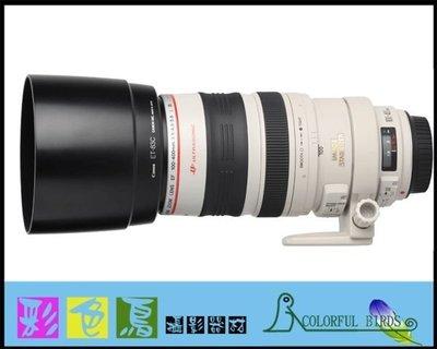彩色鳥(相機出租 鏡頭出租 租相機 租鏡頭) Canon 70D+Canon EF 100-400mm L IS 5D3