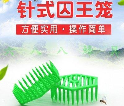 【688蜂具】塑膠針式王籠 關王 六角扣脾王籠 囚王籠 現貨 意蜂 中蜂 洋蜂 土蜂 野蜂 養蜂工具 扣王罩 保護罩