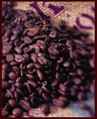 【ROSE 玫瑰咖啡館】黃金曼特寧咖啡豆一磅 450g..新鮮烘培 現訂現烘