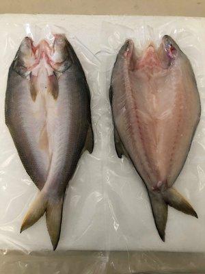 ┬ ┬【居酒屋限定】午魚一夜干  特選黃金尺寸/漁村達人風乾手法